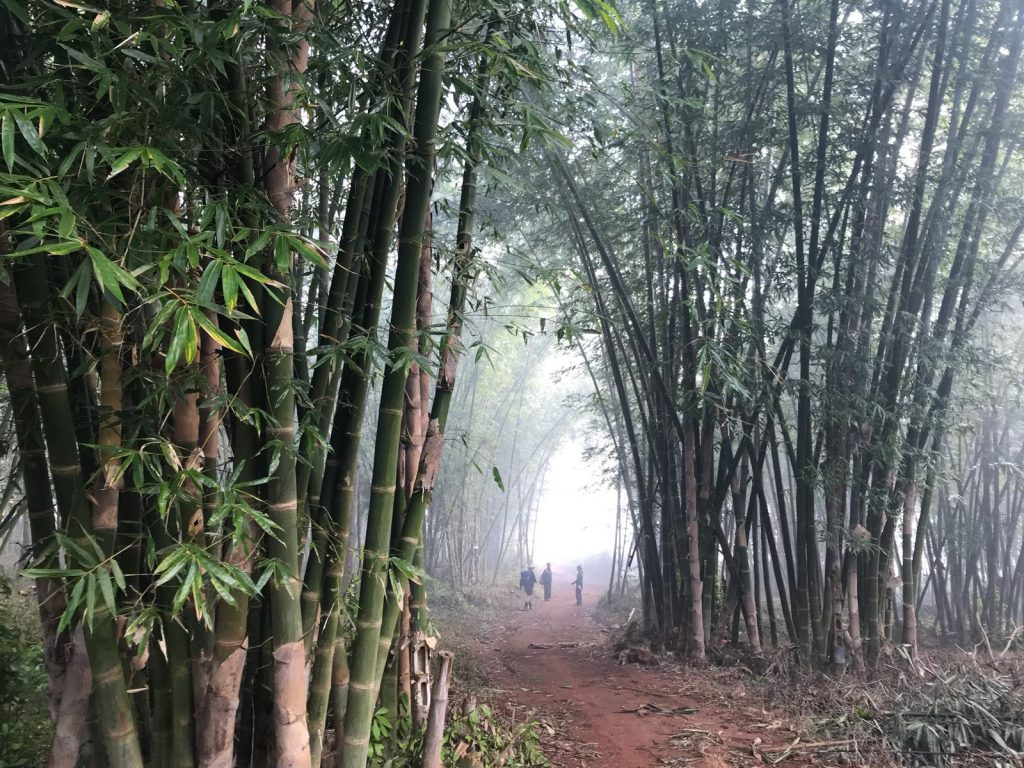 Bamboo forest mist