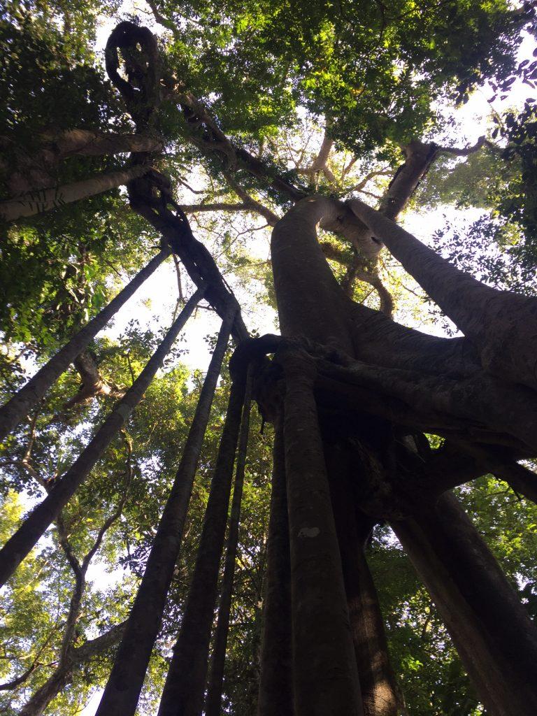 Strangle tree