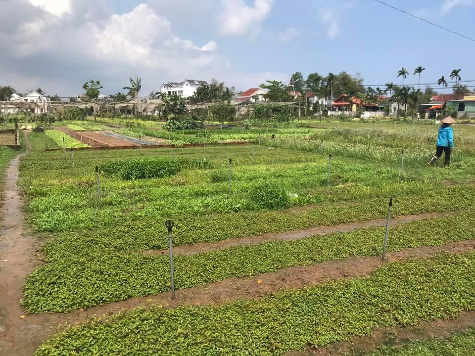 vegetable village