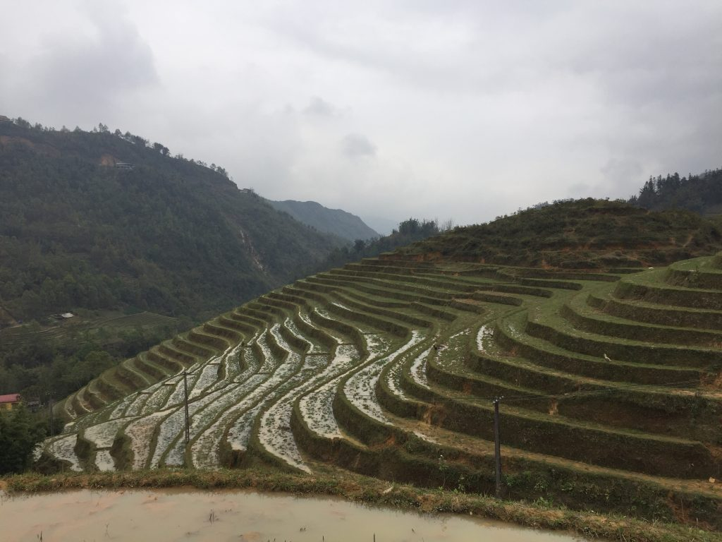 Ancient rice terraces in Sapa, Vietnam.