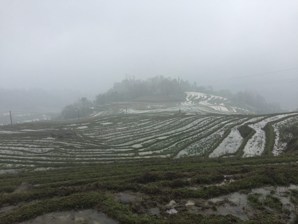 Sapa rice terraces covered in mist.