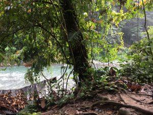 Gunung Leuser National Park Campsite 2 Tent
