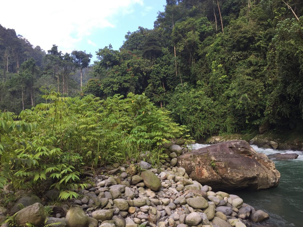 Gunung Leuser National Park campsite two